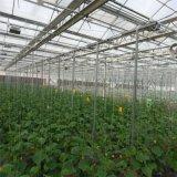 金坤連棟玻璃溫室設計 玻璃溫室大棚建造
