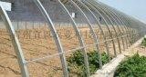 山西優質日光溫室,日光溫室廠家