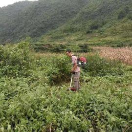 攀枝花市无刷电动割草机充电式小型农用除草机