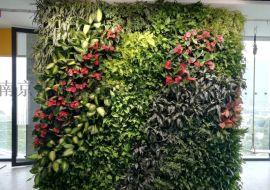 鲜活真绿植花墙,南京垂直绿化,室内外真绿植花墙