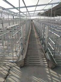 猪用自动化料线猪用料线料塔猪场自动化喂料系统
