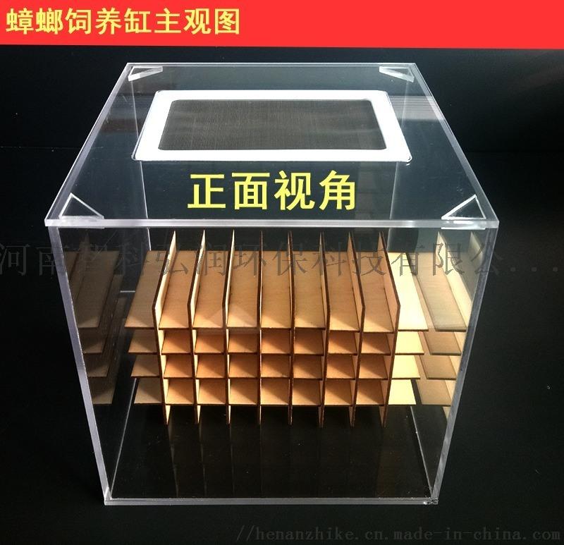 蟑螂缸蟑螂飼養盒 疾控設備