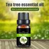茶樹油茶樹精油互葉白千層油