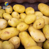大型果蔬清洗去皮機  土豆 蓮藕去皮機