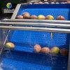果蔬清洗风干分选大型生产线(A)