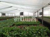 吕梁岚县钢结构车间大棚 方山温室花卉种植棚
