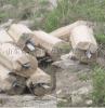 生产加工供应富沃德接地模块防雷接地材料