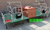 养猪设备大全镀锌管母猪产床母猪产子栏哪里买