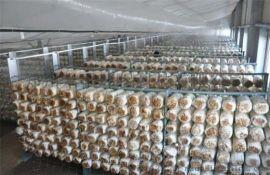 食用菌喷雾加湿设备全国发售