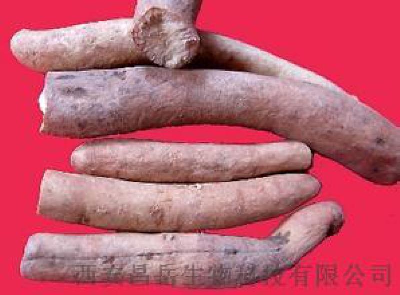 白芍提取物 芍药甙 昌岳生物