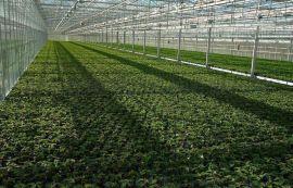 菏泽保温透明阳光板 菏泽阳光板温室工程