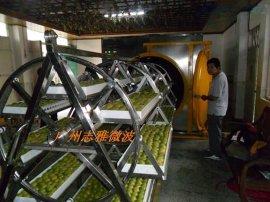 广州志雅30KW罗汉果微波真空干燥机