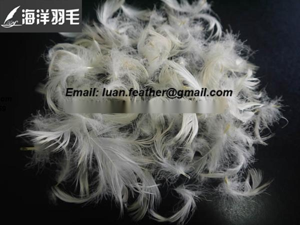 大量供应安徽皖西大白鹅绒白鸭羽绒低价 提供各种品质各种标准的水洗羽绒,鸭绒、鹅绒