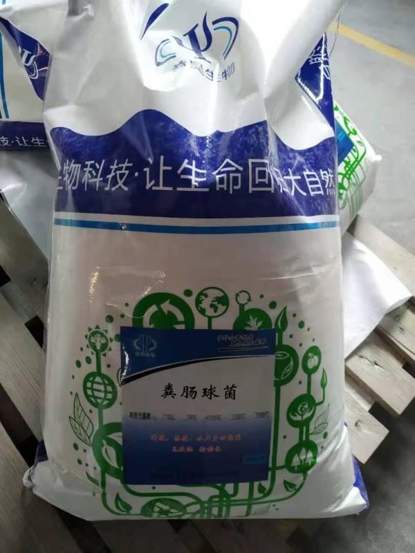 饲料厂用丁酸梭菌-预混料浓缩料添加用丁酸梭菌