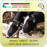 厂家供应动物耳标 rfid猪牛羊马电子耳标 牲畜溯源养殖,农场畜牧业生长情况监控管理