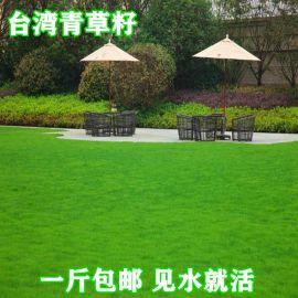 台湾青草坪种子四季青高羊茅狗牙根黑麦草耐践踏庭院护坡绿化草籽