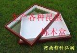 昆虫保存标本盒,植物标本盒,透明标本盒