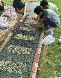 泰安鹅卵石直供5--8厘米标准变压器鹅卵石8--16毫米水处理鹅卵石滤料