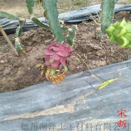 果园防草布的铺设方法