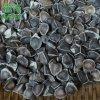 非洲辣木籽和印度辣木籽哪个好