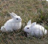 定做前进兔子 仿真兔子有声音 眼睛会亮 毛绒玩具兔子电动毛绒
