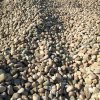 保定机制鹅卵石生产厂家 本格机制鹅卵石