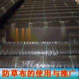 淄博市2米宽除草布 1米宽盖草布 1.5米宽防草布
