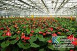 搞花卉种植一亩温室大棚造价大约多少钱