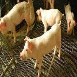 安平3-8mm养殖场漏粪用铁丝网