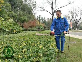 园林景观绿化养护 成都汇美园景绿化养护