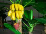 供应厂家直销 玻璃钢雕塑萌物植物雕塑 香蕉雕塑 果园花园水果店摆件
