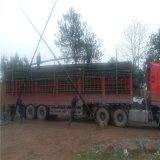 供应2米-9米小山竹 小竹竿