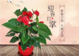 广州市荔湾区盆栽摆件植物租摆办公室绿化管理办公室花卉盆栽