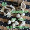 陕西辣木籽产品供应/哪里卖多少钱一斤