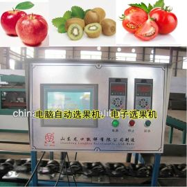 猕猴桃自动选果机电子称重选果机