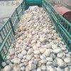 5-8厘米变压器鹅卵石价格 呼和浩特本格天然鹅卵石批发
