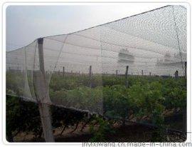 蝗虫养殖网