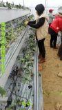 草莓立体式种植栽培槽厂