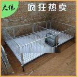 双体2.2*3.6铸铁仔猪保育床养猪设备育肥栏