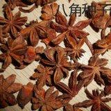 散装大茴香种子八角茴香小茴香唛角八角树八角好种子食材种籽批发