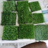 模擬草坪大草三色草坪