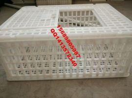 养鸡运输箱透气耐摔易清洗消毒塑料鸡笼