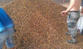 水处理垫层鹅卵石滤料