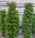 抱柱式立体基质栽培