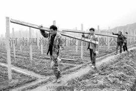 葡萄架机厂家水泥杆机价格
