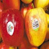 农家土鸡蛋标签贴纸/红富士苹果不干胶商标