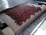 玫瑰花微波杀青机 新型玫瑰花微波杀青设备 专业厂家定做玫瑰花杀青干燥设备 批发价格