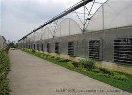 热镀锌钢管连体pc板温室大棚
