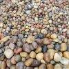 变压器鹅卵石_5-8公分变压器鹅卵石标准_鹅卵石。