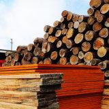 建筑木方就选鸿香润木厂,工厂直销